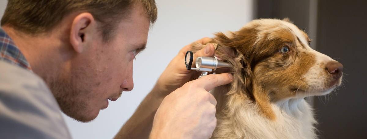 vétérinaire - consultation médicale