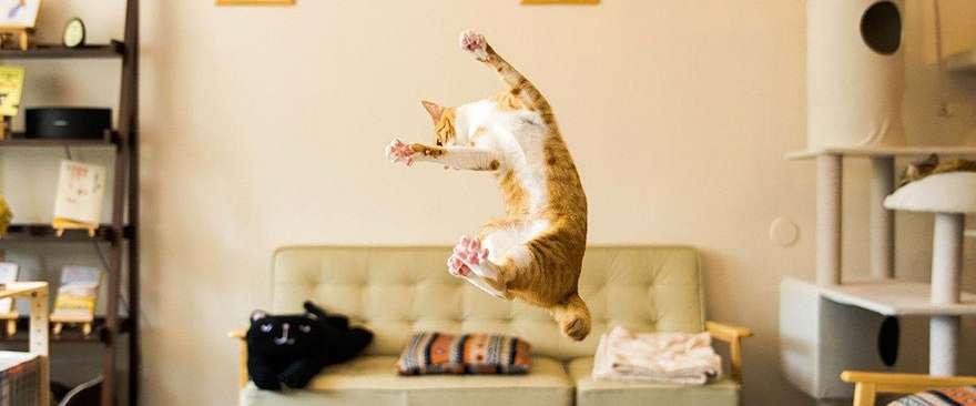 chat, veterinaire domicile